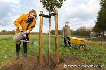 """Geen groepsaankoop voor elektriciteit, maar voor fruitbomen en struiken: """"Goed tegen de hittestress"""""""