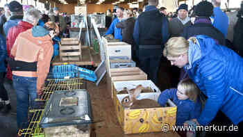 Bayern/Weilheim: Peta möchte Verbot für Kleintiermarkt in Oberbayern - wegen Pandemie-Gefahr - merkur.de
