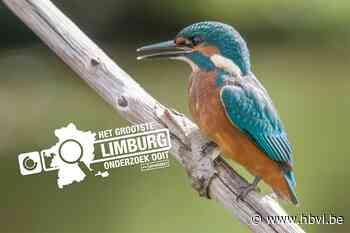 Hoeveel natuur heeft Alken? (Alken) - Het Belang van Limburg