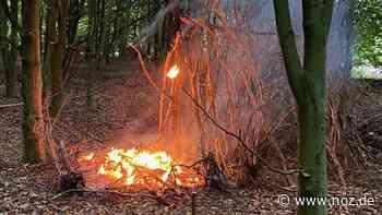 Feuer in Wald bei Werlte - Polizei vermutet Brandstiftung - noz.de - Neue Osnabrücker Zeitung