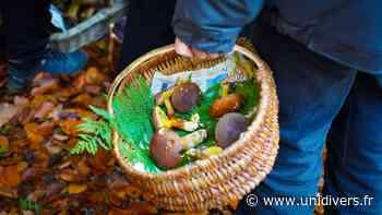 Sortie découverte des champignons Montataire - Unidivers
