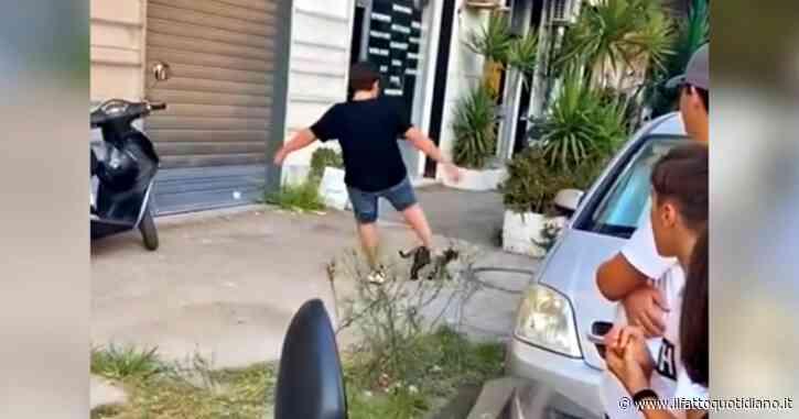 Napoli, dà un calcio a un gatto per strada e lo uccide: il video finisce sui social, due minori denunciati