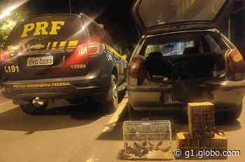 Polícia Rodoviária Federal apreende 200 pássaros silvestres em carro em Pouso Alto, MG - G1