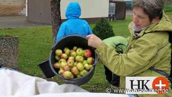 Mitglieder der Zukunftswerkstatt Herzberg ernten Äpfel - HarzKurier