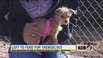 Dogs found abandoned outside local animal shelter