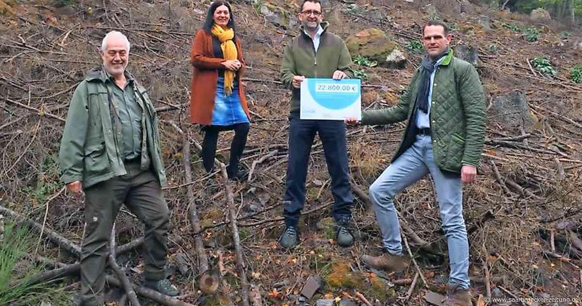 Mettlach erhält Geld vom Umweltministerium für Kampf gegen Borkenkäfer - Saarbrücker Zeitung