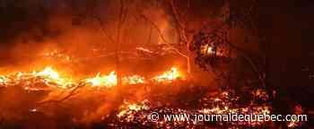 Incendies en Californie: plus de 405 000 hectares brûlés en un mois