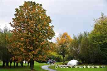 Herbstimpressionen aus dem Seepark Horstmar - Ruhr Nachrichten