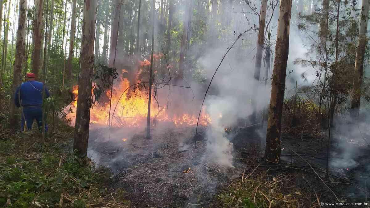 Grande incêndio florestal é registrado no interior de Faxinal dos Guedes - Canal Ideal