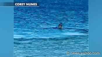 Shark eats seal off Cape Cod beach