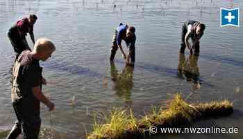 Gewässer: Lebensraum für Fische und Insekten in Edewecht - Nordwest-Zeitung