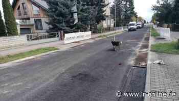 Straßenbau: Autofahrer nach Sanierung der B 101 in Elsterwerda irritiert - Lausitzer Rundschau