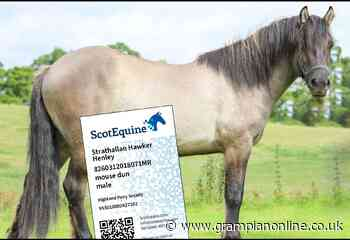 Horse owners across Aberdeenshire urged to join new ScotEquine card scheme - Grampian Online