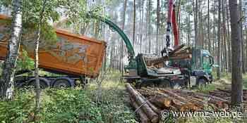 Energiequelle Heidewald?: Kann das Holz der Dübener Heide Ölheizungen ablösen? - Mitteldeutsche Zeitung