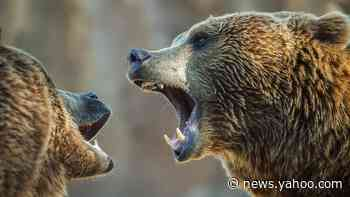 Shanghai zoo fatal bear attack: Visitors see worker being killed