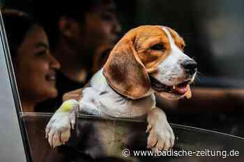 Grenzach-Wyhlen will die Hundesteuer erhöhen - Grenzach-Wyhlen - Badische Zeitung