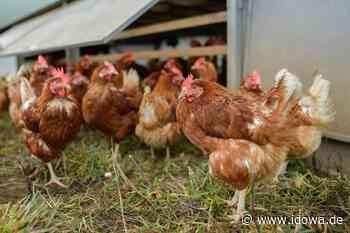 Vorfall in Winzer: Mann erschießt Huhn mit Luftgewehr - idowa