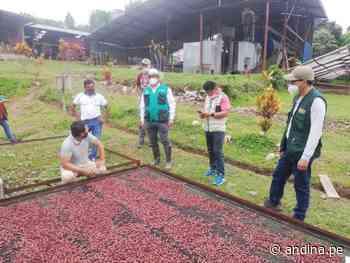 San Martín elabora una nueva ruta agroturística del cacao en Chazuta - Agencia Andina