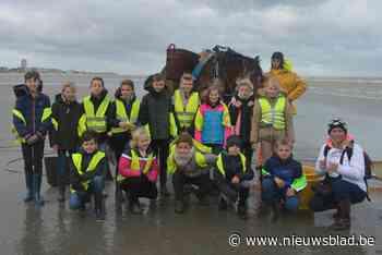 Naar hartenlust garnalen zoeken en schelpen vangen tijdens Zeeklassen - Het Nieuwsblad
