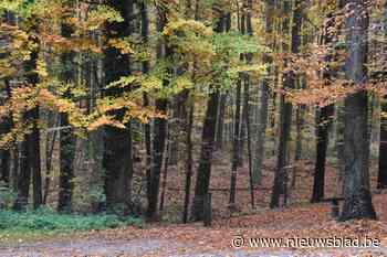 Voor elke ingezamelde gsm plant Natuurpunt een boom in het Pajottenland
