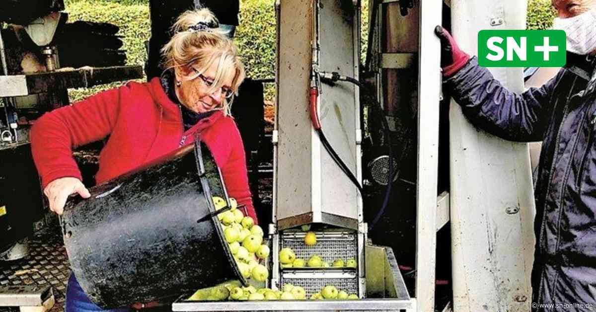 Stadthagen: Bei der Most-Aktion des Gartenbauvereins entsteht Saft aus 6500 Kilo Äpfeln - Schaumburger Nachrichten