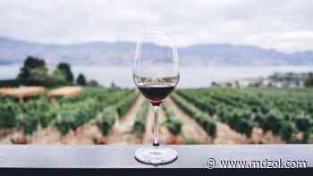 Mendoza: Una ciudad que vive del vino - MDZ Online