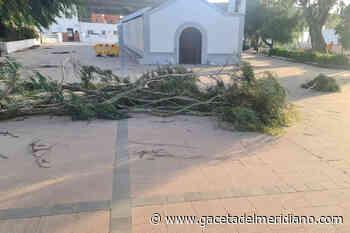 Valverde cierra la plaza de San Andres por desprendimiento de ramas - GacetadelMeridiano