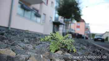 Erneute Kritik an Schottergärten in Lohr - Main-Post