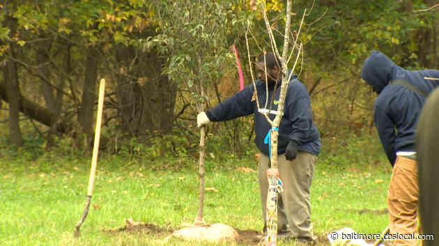 Baltimore Tree Trust Plants 10,000th Tree Planting In City As Part Of Effort To Expand Tree Canopy