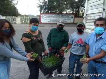 Rescatan a San Martín Peras con cultivos de hortalizas y vegetales - Diario Marca de Oaxaca