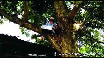 El otro rostro de la educación en San Martín - Diario Voces