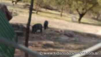 Descubren dos animales extintos en la cima del Cerro de la Cruz - El Diario de Carlos Paz