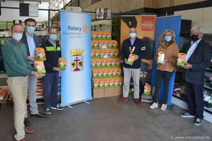 Rotary strijkt met tulpenactie in Aveve neer