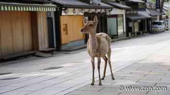 Japanese man invents 'edible' plastic bag alternative to save Nara's sacred deer