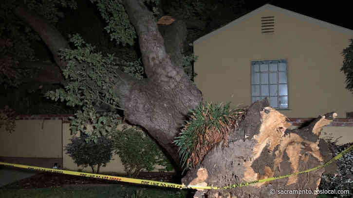 Large Tree Falls, Misses Sacramento Home By Inches