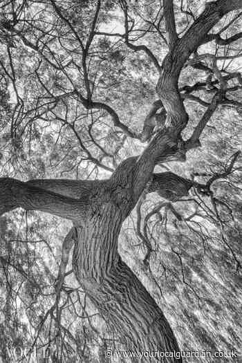 Photographer marks legacy of King George's Park tree