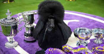Westminster Dog Show Will Move to the Country in June