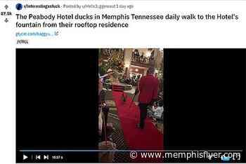 MEMernet: Reddit Bonanza! - Memphis Flyer