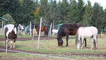 Altensteig (Württ.): Getötetes Pony empört Menschen - Altensteig - Schwarzwälder Bote