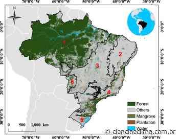 Regeneração de floresta é importante sumidouro de carbono - Ciência e Clima