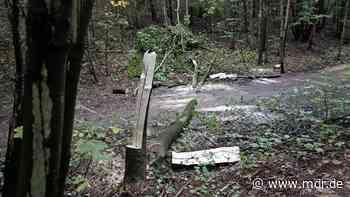 Mann stirbt bei Baumfällarbeiten in Freital - MDR
