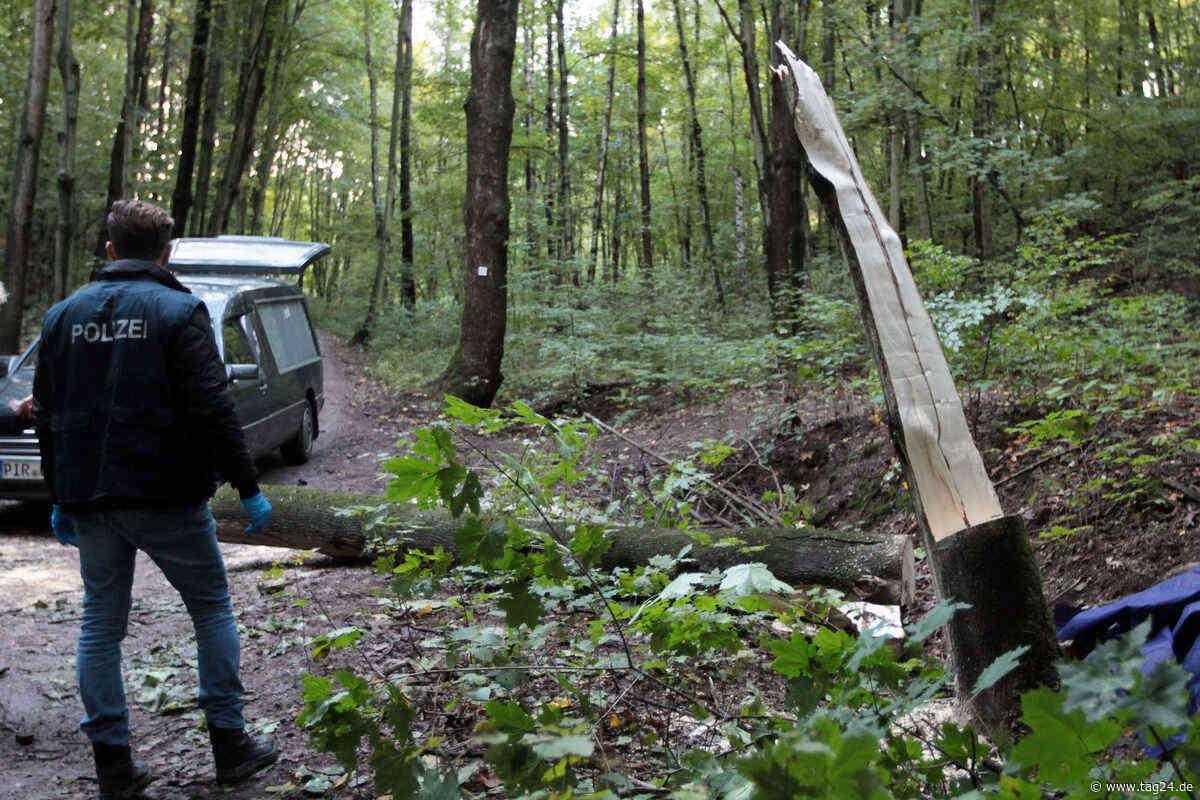 Tödlicher Arbeitsunfall in Freital: 46-Jähriger wird von Baum erschlagen und stirbt - TAG24