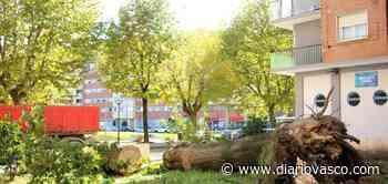 El fuerte viento tumbó un árbol en Pontika - Diario Vasco
