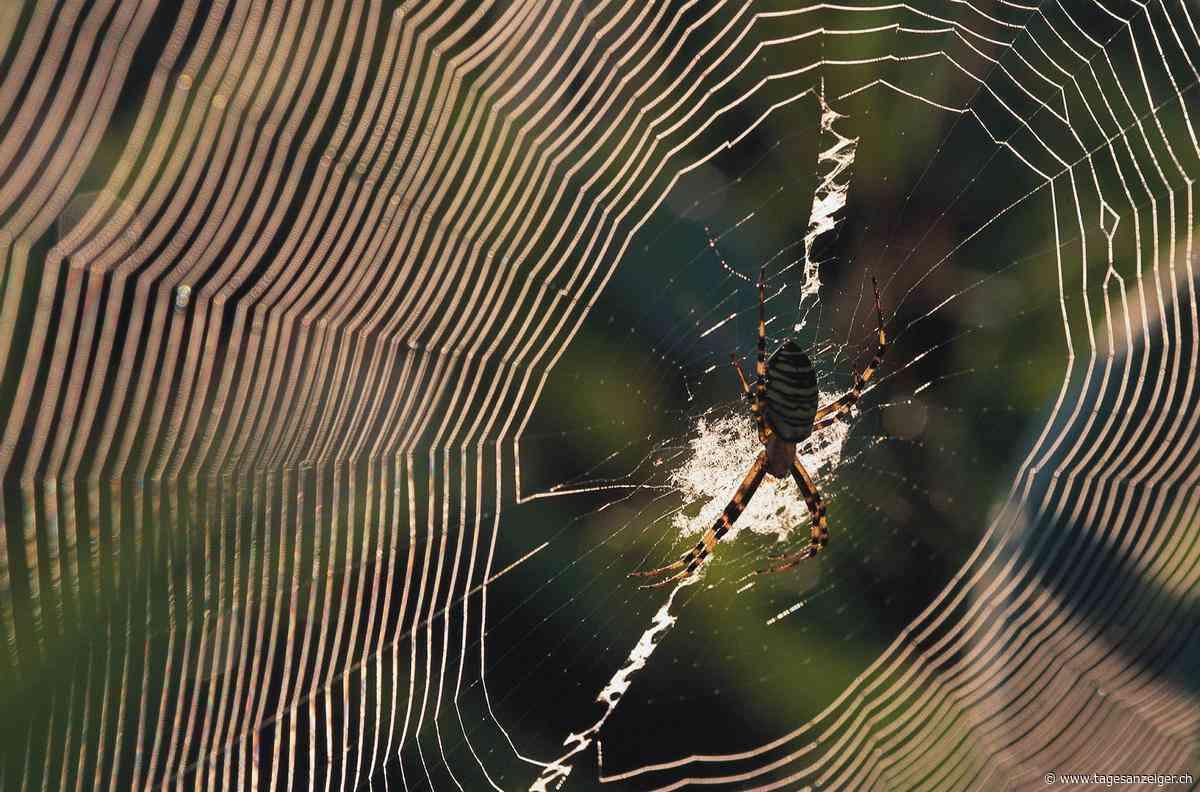 Angst vor Spinnen und Schlangen – Gefühlte Monster und reale Ungeheuer - Tages-Anzeiger