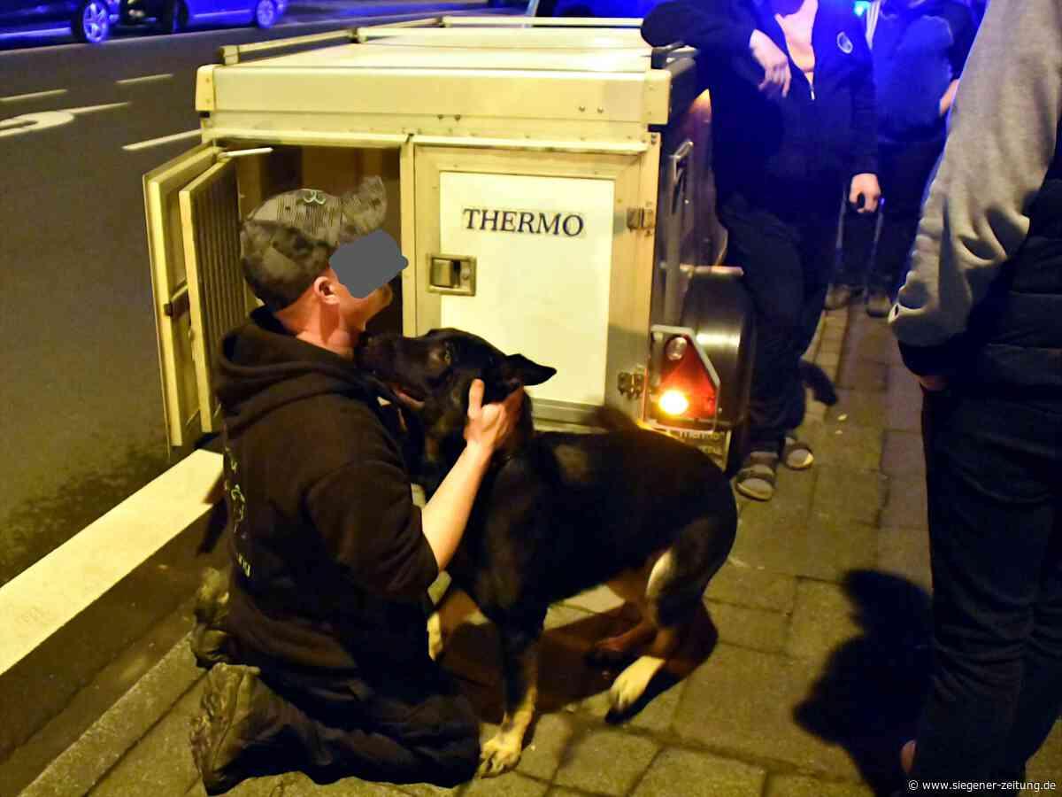 Herrchen verliert Vierbeiner: Schäferhund verursacht Verkehrsunfall - Netphen - Siegener Zeitung