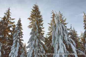 'Early season snowfall' prompts special weather bulletin for parts of Vancouver, Lower Mainland - Vancouver Is Awesome