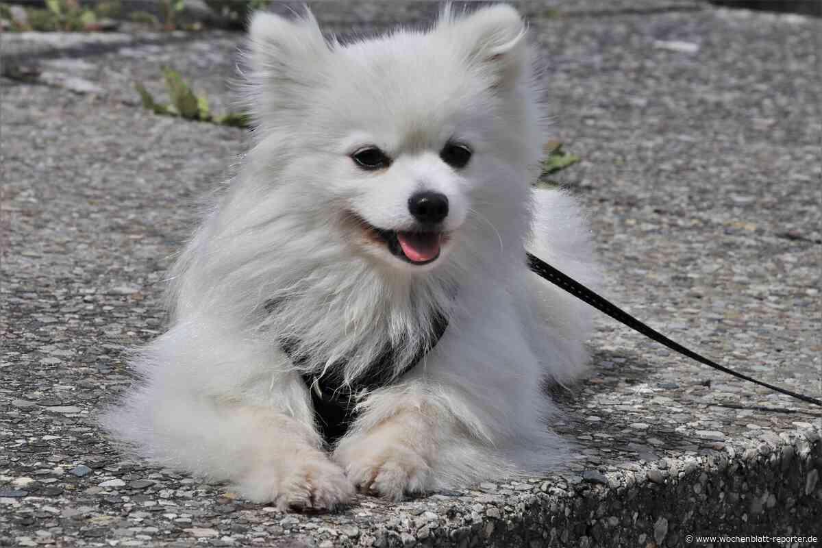Polizei warnt Hundebesitzer: Giftköder in Bellheim gefunden - Bellheim - Wochenblatt-Reporter