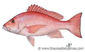 NOAA Fisheries modifies south Atlantic red snapper fishing seasons - The Coastland Times - The Coastland Times
