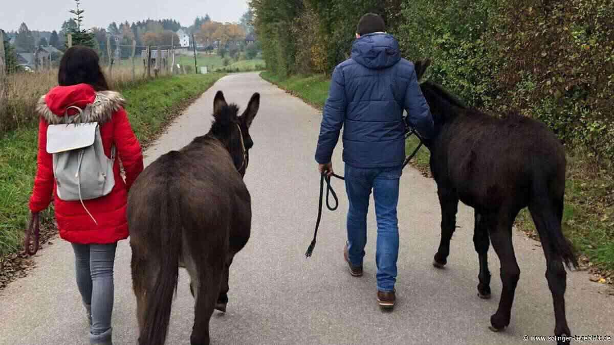 Bei dieser Wanderung gehen Esel mit