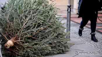Stadt Papenburg wirbt um Weihnachtsbaum-Spenden - NOZ